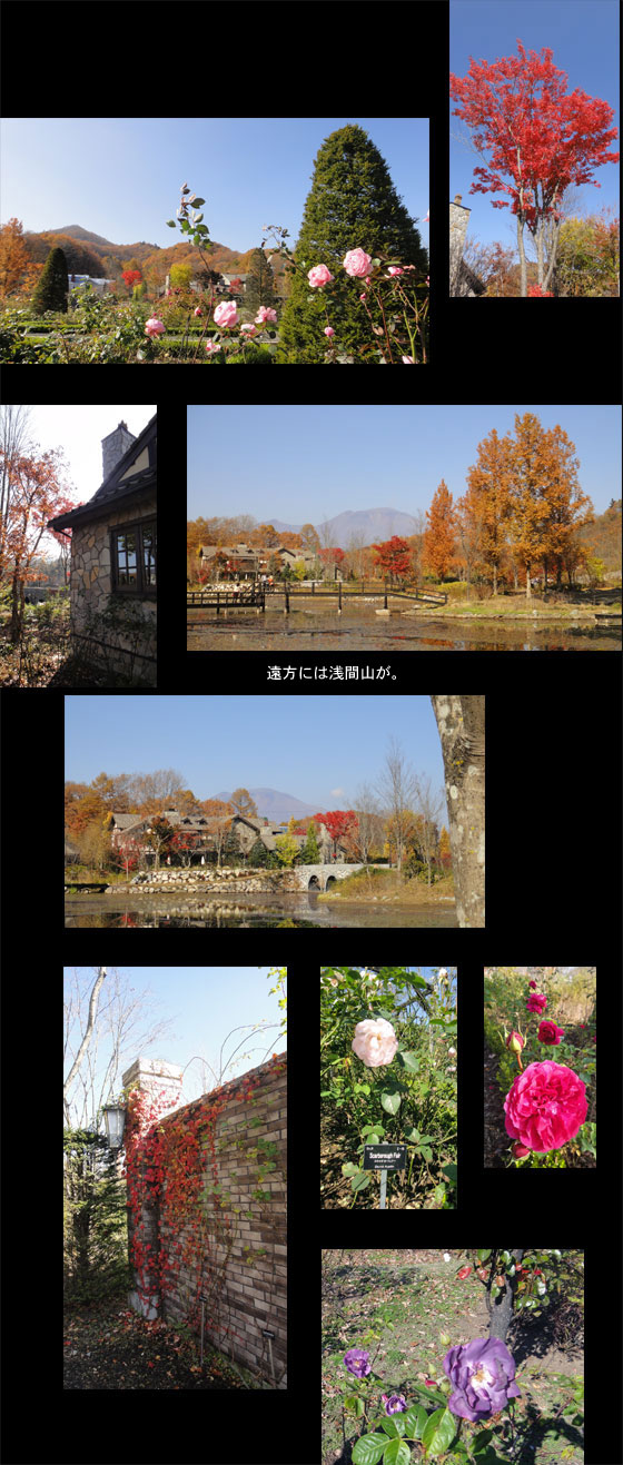 blog11.11.4lakegarden2.jpg
