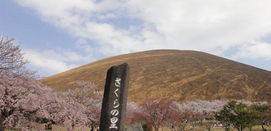 blog11.4.10sakura1.jpg