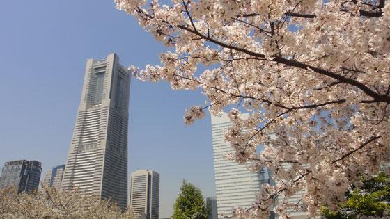 blog11.4.14yokohama1.jpg