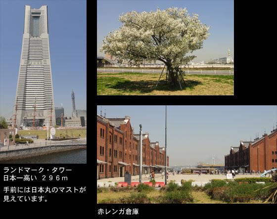 blog11.4.14yokohama2.jpg