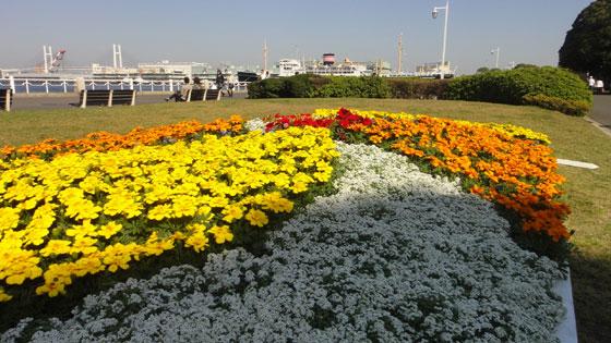 blog11.4.14yokohamahikawama.jpg