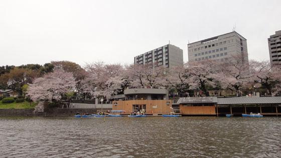 blog11.4.7chidorigafuchi1.jpg