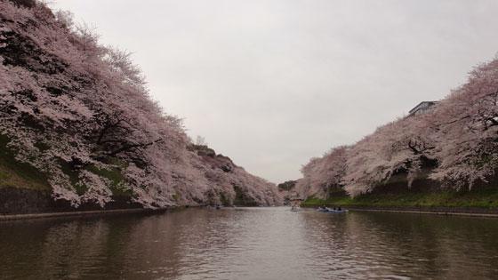 blog11.4.7chidorigafuchi2.jpg