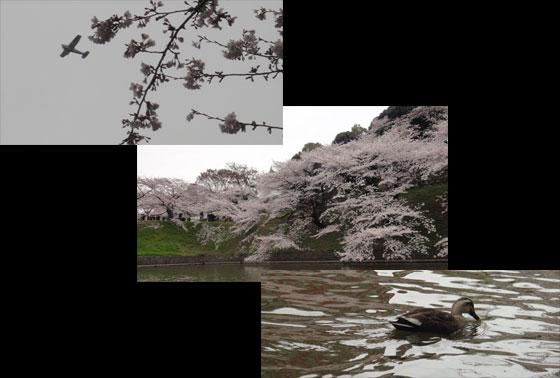 blog11.4.7chidorigafuchi5.jpg