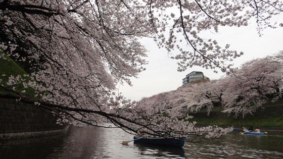 blog11.4.7chidorigafuchi7.jpg
