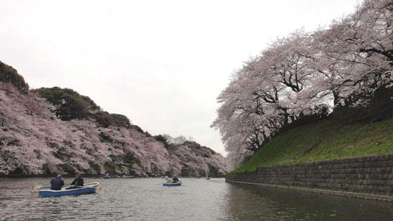 blog11.4.7chidorigafuchi8.jpg