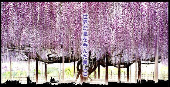 blog13.4.25flowerpark1.jpg