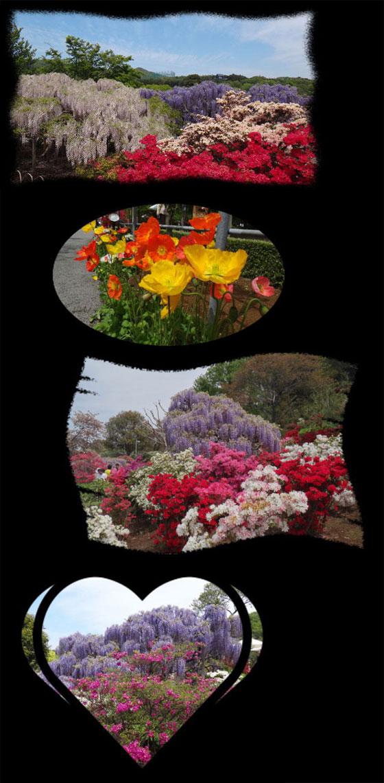 blog13.4.25flowerpark3.jpg
