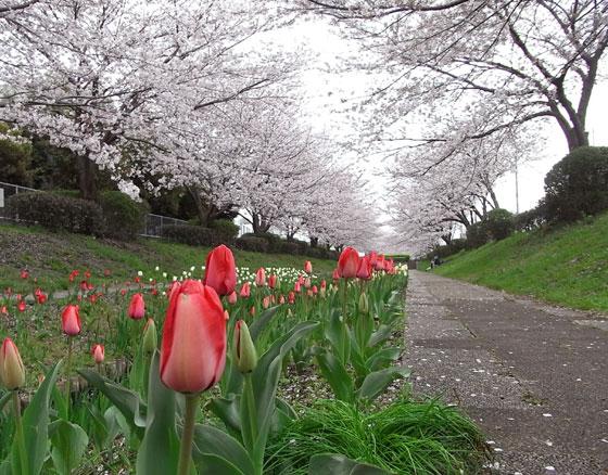 blog2010higashikata1.jpg