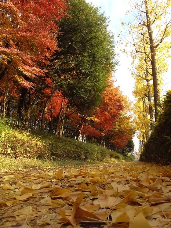 blogkohyowanpo1.jpg