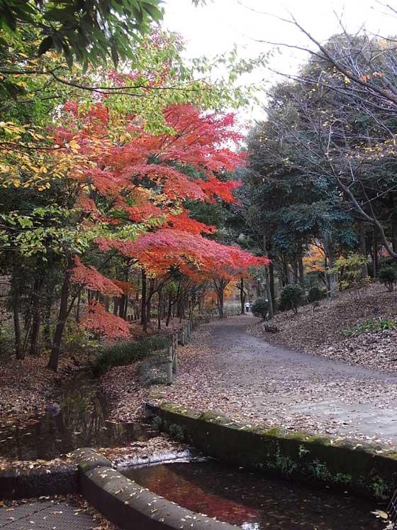 blogkohyowanpo3.jpg