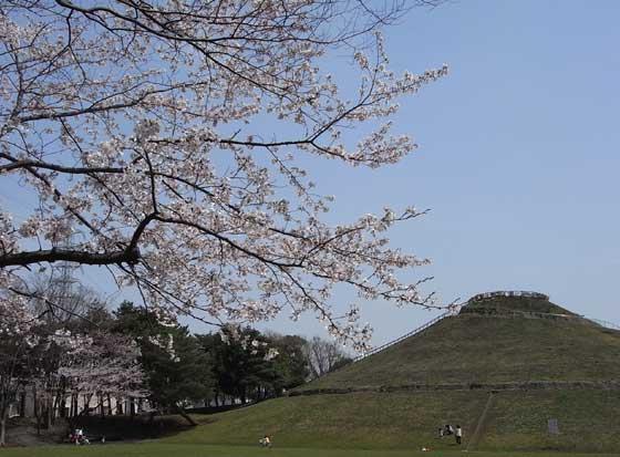 blogsakura20101.jpg