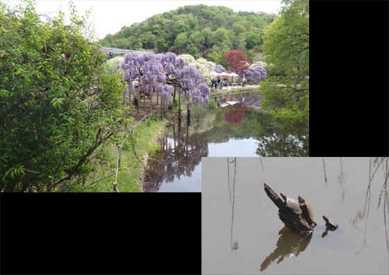 blog13.4.25flowerpark2.jpg