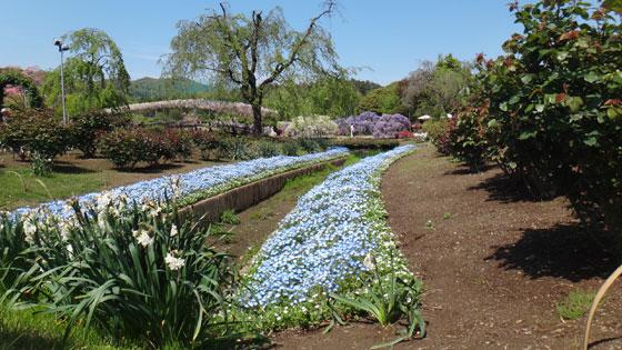 blog13.4.25flowerpark7.jpg