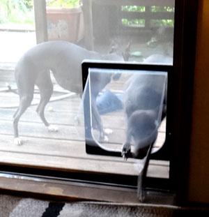 blogdogtrap2.jpg