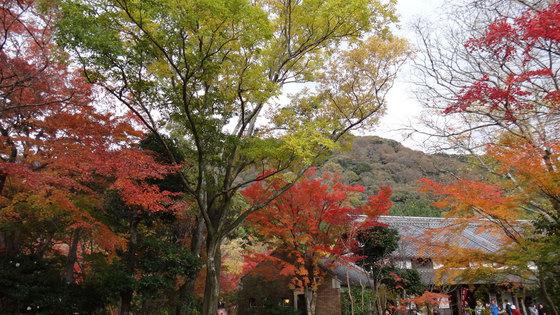 blog14.11.14yufuin1.jpg