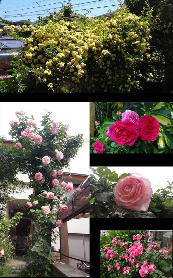 blog14.6.13flower.jpg