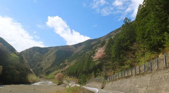 blog15.4.21sakurapa.jpg