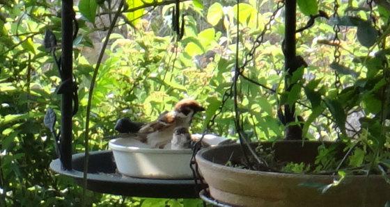 blog15.6.6sparrow.jpg